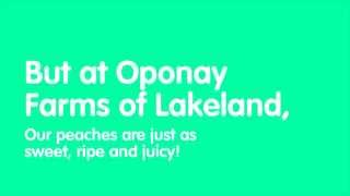 U Pick Peaches in Lakeland FL | Oponay Farms LLC