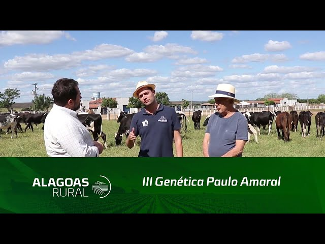 III Genética Paulo Amaral terá maior oferta de fêmeas girolando do Nordeste