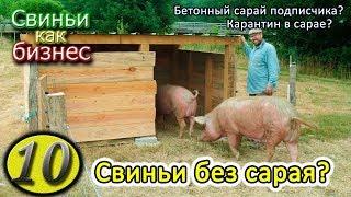 видео: ДЕШЕВЫЙ САРАЙ ДЛЯ СВИНЕЙ