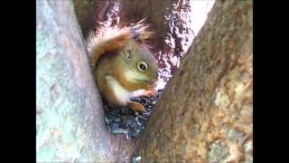 A letter to Elise - The cure... with karl redsquirrel