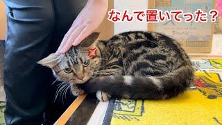 お家に置き去りにされて飼い主が帰宅した瞬間ブチギレてしまった猫