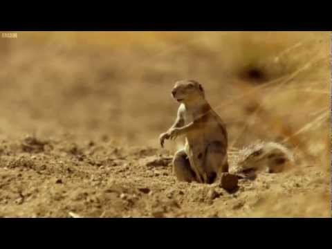 Africa Squirrel Drops Nut in Shock - YouTube