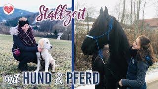 STALLZEIT mit Hund und Pferd | VLOG 6 | Pilsali