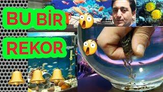 Balik Kusturma Operasyonu, Balık Kusturma Videoları, Akvaryum Balıkları, Balık K