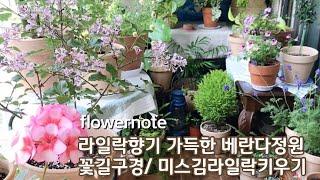 라일락향기 가득한 베란다정원에 생긴 봄꽃길/ 미스김라일…