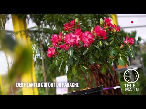 Jardin - Des plantes qui ont du panache