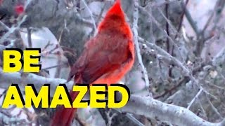 Relaxing Bird Song & Nature Sounds Birds Nature Midwestern United States,
