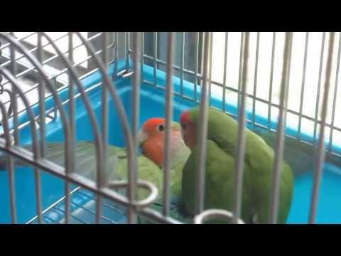 025  Love Birds Marriage 8-2013