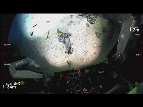 ROV SuBastian Dive 072 - Te Tarina Seamount - Deep Sea Corals of PIPA