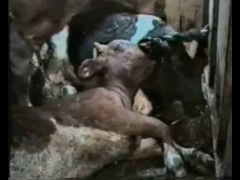Terrícolas (Earthlings) Documental doblado castellano