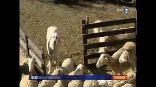 Reportage France 3 - Protection des brebis par le Patou