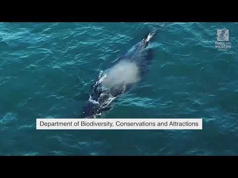 Whale Research Is Vital To Better Fisheries Management In WA