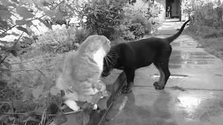 КАК ВЫЖИТЬ КОТУ СРЕДИ ДВУХ РОТВЕЙЛЕРОВ.Дрессировка котов и собак😊
