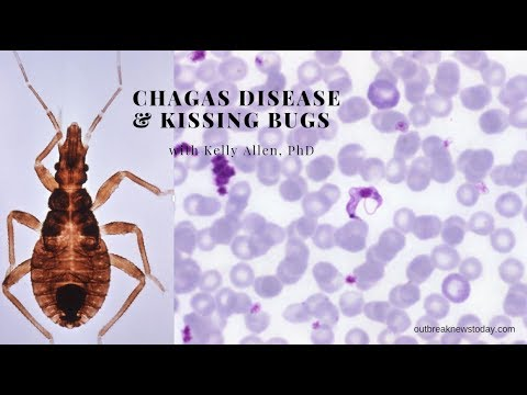 Chagas Disease And Kissing Bugs