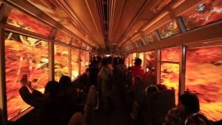 ライトアップされた紅葉のトンネル、叡山電鉄 二ノ瀬~市原間「もみじのトンネル」