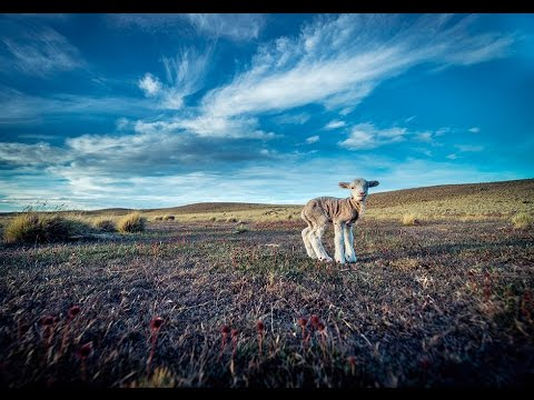 Argentine Patagonia: Sustainable Grazing for a Sustainable Future (360° Video)