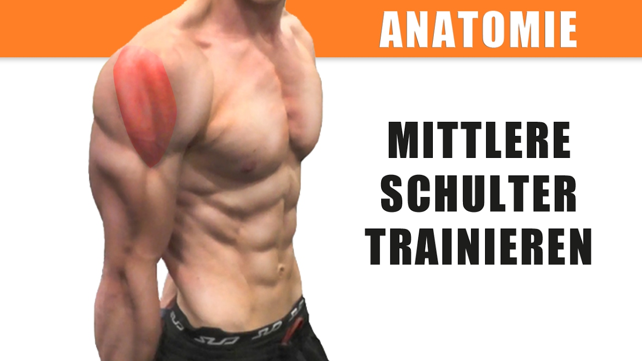 Mittlere Schulter trainieren – Anatomie des Deltamuskels – Seitliche ...