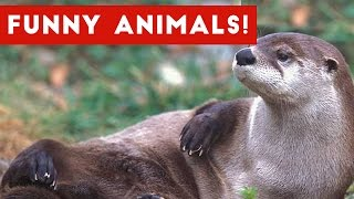 Otter Has No Chill | Zoo Animal Blooper & Reaction Videos 2017 Weekly Compilation | Funny Pet Videos