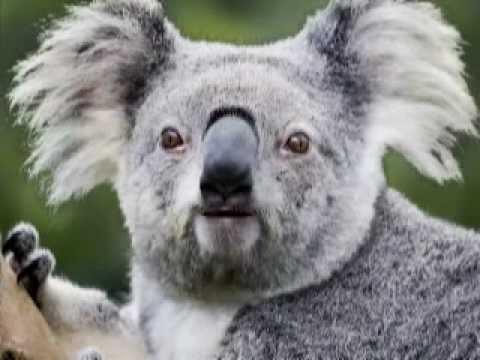 image drole koala