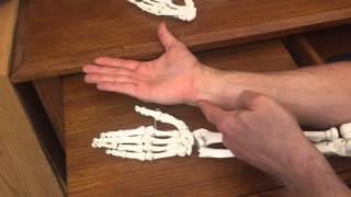 Anatomy - Ulna and Radius - Easy to understand- Anatomy 101 Monday