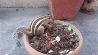 Mommy Squirrel finds out her baby is safe Watch what happens next!