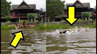 Vlasnik je skočio u rijeku, ali pogledajte šta su njegovih 16 Zlatnih retrivera uradili!