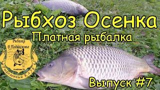видео платная рыбалка в подмосковье