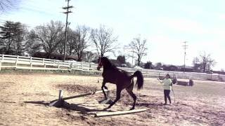 How To Train Your Horse To Jump