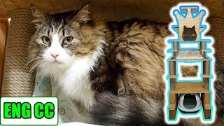 Continuation of Boss Cat's Room Renovation Project (New cat tower completed) 【Eng CC】