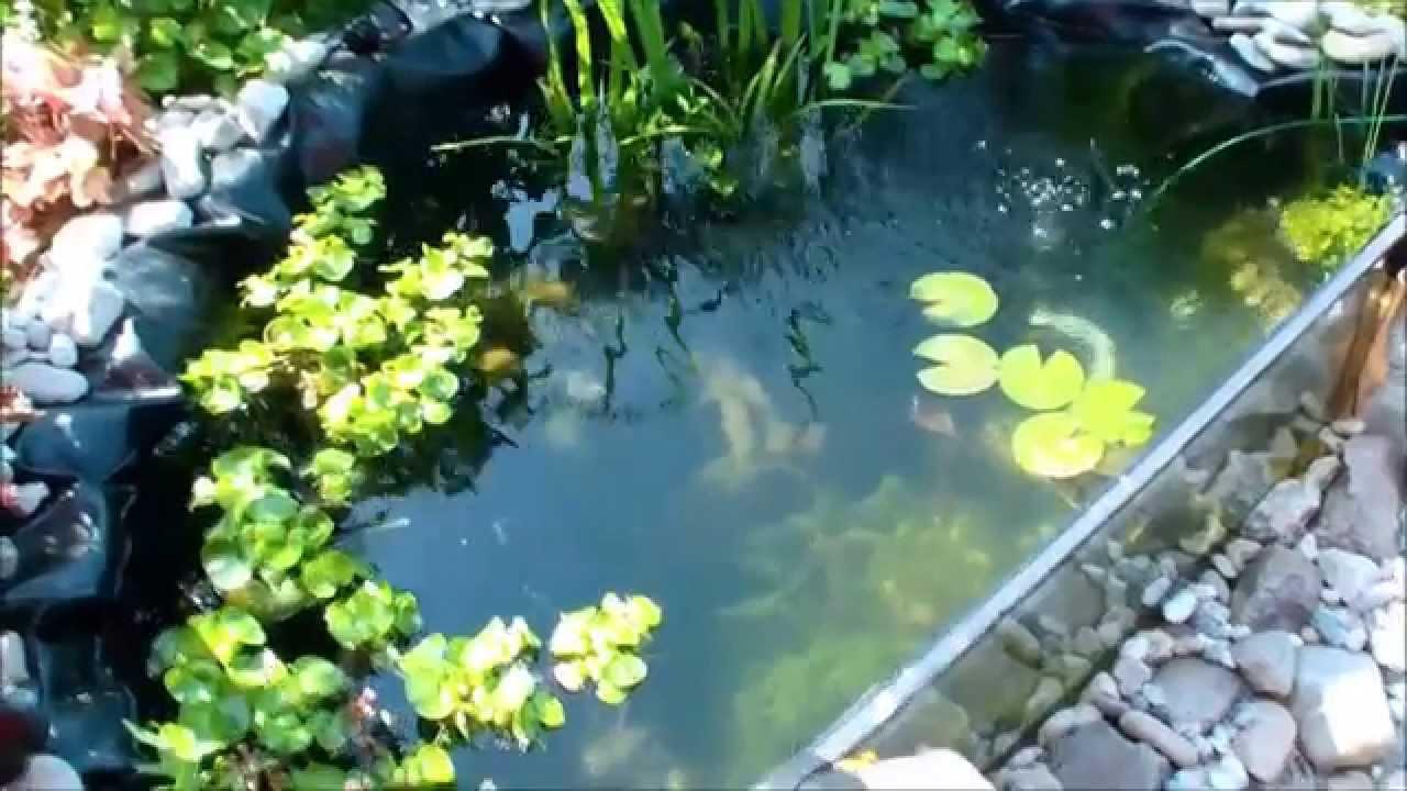 Notropis und guppy im gartenteich youtube for Gartenteich aquarium