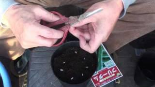 菜園作業/春のたねまき2(ウリ類)