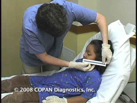 How To Collect Nasopharyngeal Samples For Flu Testing Dr
