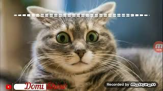 Незасмейсиа челлендж с котами