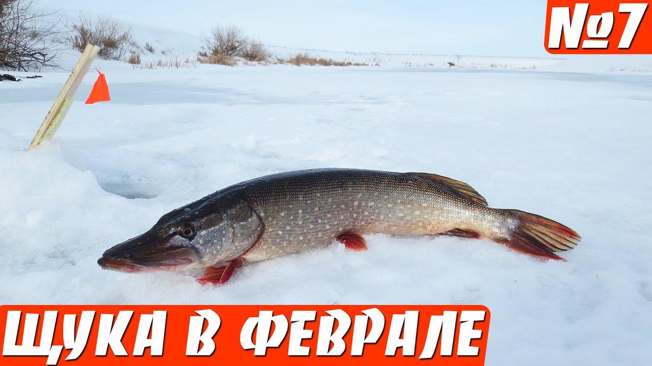 Итоги глухозимья 2016. Ловля щуки на жерлицы