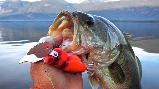 Megabass Pagani Gatta-X Bass Fishing