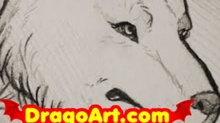 How to Draw a Wolf, Timber Wolf Sketch, Step by Step, In Pencil