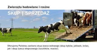 Sprzedaż zwierząt hodowlanych skup krów Siedlimowo Markopol