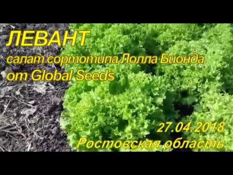 Левант - сорт салата от Global Seeds