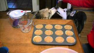 Homemade Birthday Dog Muffins With Pumpkin Treats Recipe |  Snacks With The Snow Dogs 5