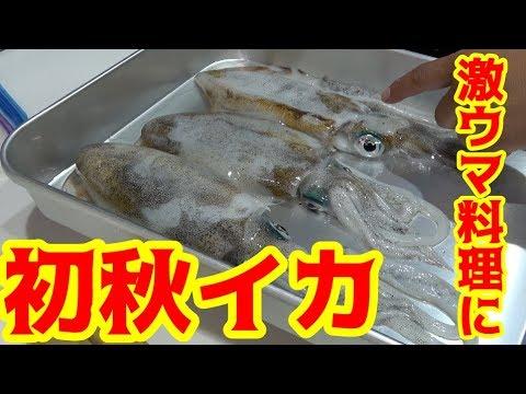 今年初の秋イカを料理して食べたら超絶美味かった!!