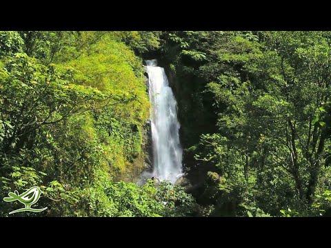 3 Hours Of Relaxing Tropical Hawaiian Music | Meditation, Sleep, Study, Relaxation, Background