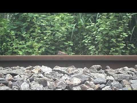 Stone on rail way track