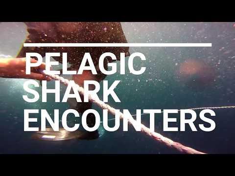 Marine Dynamics Pelagic Shark Encounters in Gansbaai, South Africa