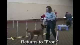 """phoenix Arizona Dog Obedience""/sit Means Sit Dog Training"
