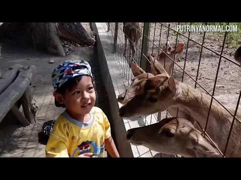 Raka Main Ke Maliran Deer Feeding [ Wisata Blitar Alas Maliran Bagian 1 ]