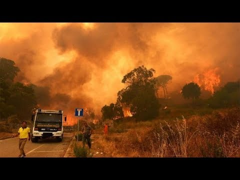 Italy wildfires: Tourists rescued by boat from Calampiso