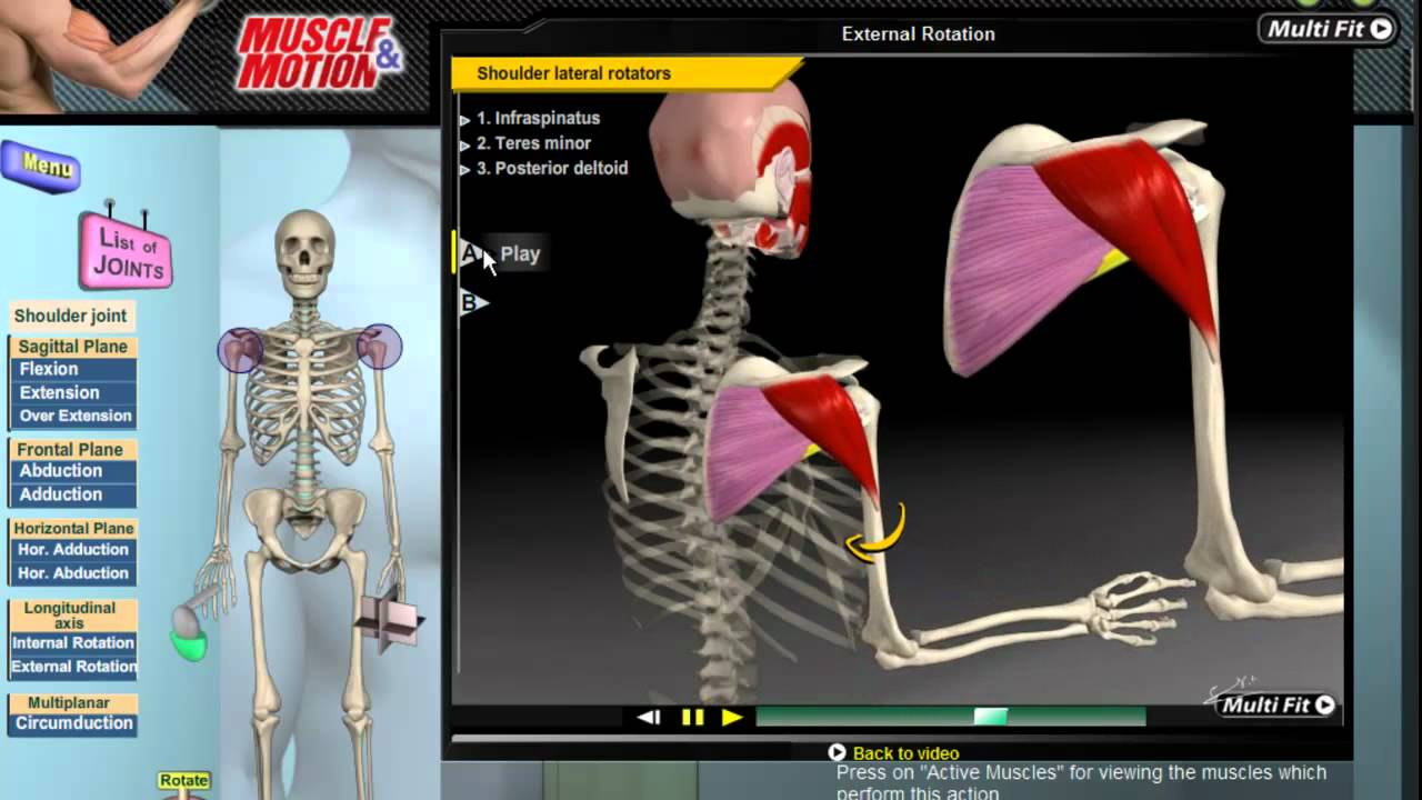 Muscle and Motion - Kinesiology - YouTube