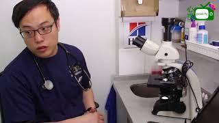 【心視台】香港 姚子祥獸醫-現場為患有皮膚問題的兔子做檢驗及治療