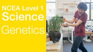 Genetics | NCEA Level 1 Science Strategy Video | StudyTime NZ