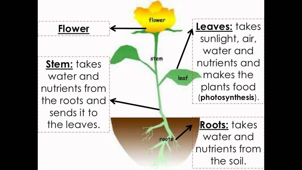 How plants grow 42
